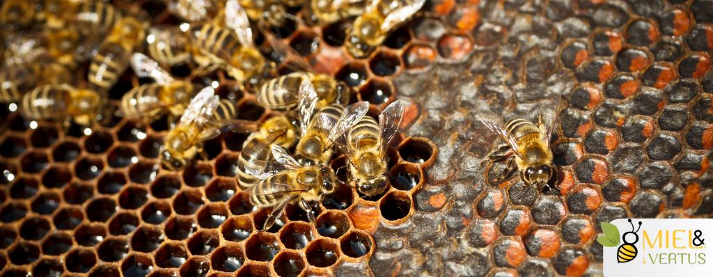 Quelle est l'utilité du miel pour les abeilles ?