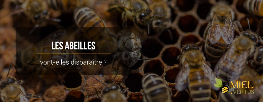 Les abeilles vont-elles bientôt disparaître ?