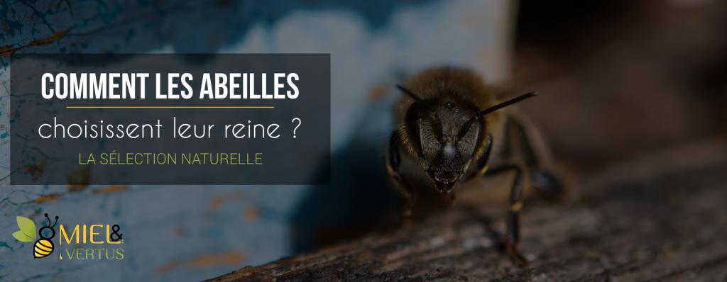 Comment les abeilles choisissent-elles leur reine ?