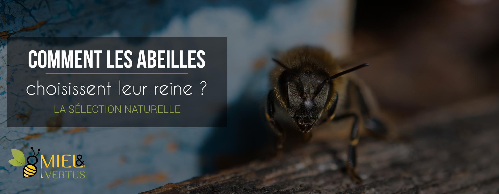 comment-abeilles-choisissent-reines