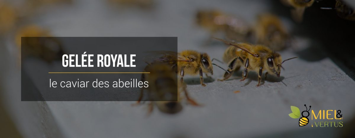 Gelée royale : le caviar des abeilles