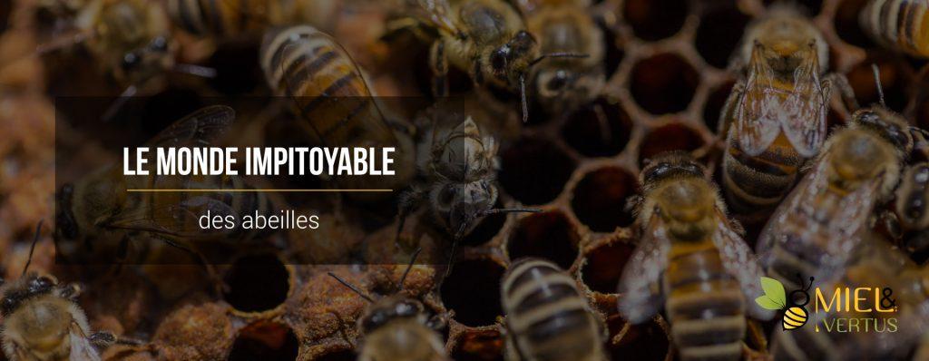 Le monde impitoyable des abeilles