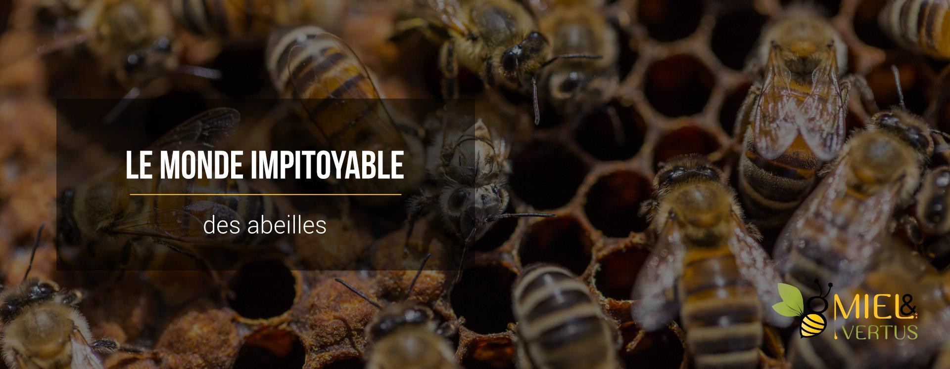 monde-impitoyable-abeilles
