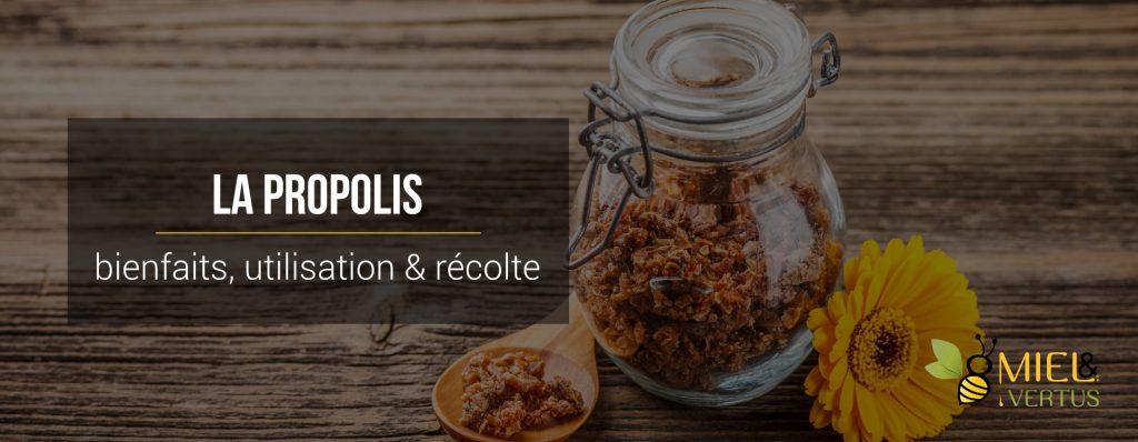 La propolis : bienfaits, utilisation et récolte [guide complet]